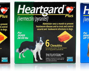 products heartgardplus6pk_2
